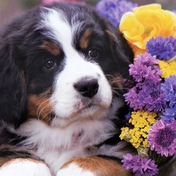 Jigsaw puzzle: Puppy with a bouquet