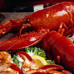 Jigsaw puzzle: Lobster
