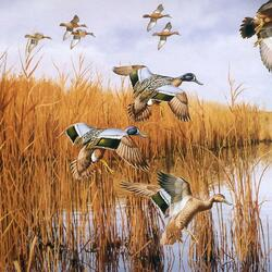 Jigsaw puzzle: Ducks in the reeds