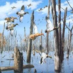 Jigsaw puzzle: Flooded forest