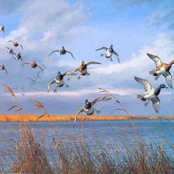 Jigsaw puzzle: Duck flock