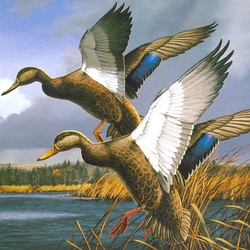 Jigsaw puzzle: Two ducks