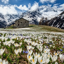 Jigsaw puzzle: Spring in the Alps