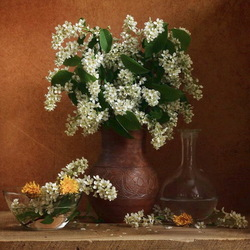 Jigsaw puzzle: Bird cherry