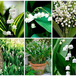 Jigsaw puzzle: Lilies of the valley
