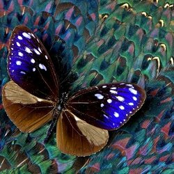 Jigsaw puzzle: Butterfly on feathers
