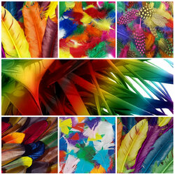 Jigsaw puzzle: Feather collage