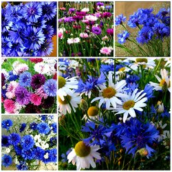 Jigsaw puzzle: Cornflowers and chamomiles