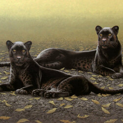 Jigsaw puzzle: Two panthers