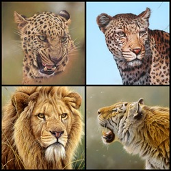 Jigsaw puzzle: Big cats