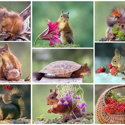 Jigsaw puzzle: Some moments from the life of a squirrel