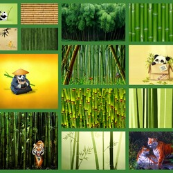 Jigsaw puzzle: Bamboo