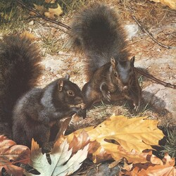 Jigsaw puzzle: Two squirrels