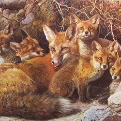 Jigsaw puzzle: Fox family