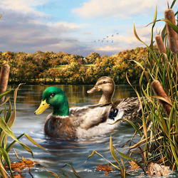 Jigsaw puzzle: Duck couple