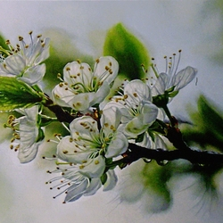 Jigsaw puzzle: Blooming cherry