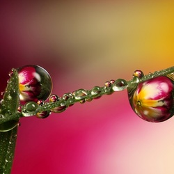 Jigsaw puzzle: Droplets