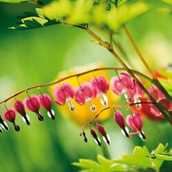 Jigsaw puzzle: Sprig of dicentra