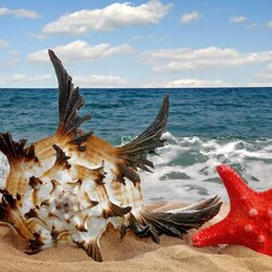 Jigsaw puzzle: Starfish and shell
