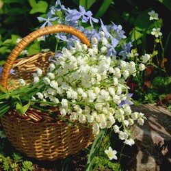 Jigsaw puzzle: Flower basket