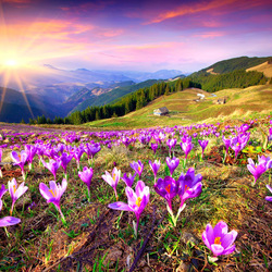 Jigsaw puzzle: Spring in the mountains