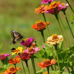 Jigsaw puzzle:  Butterfly, bee and flowers