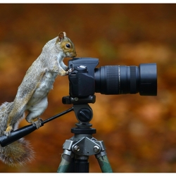 Jigsaw puzzle: Tailed photographer