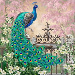Jigsaw puzzle: Handsome peacock