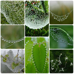 Jigsaw puzzle: Dew and cobweb