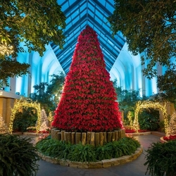 Jigsaw puzzle: Christmas tree from poinsettia