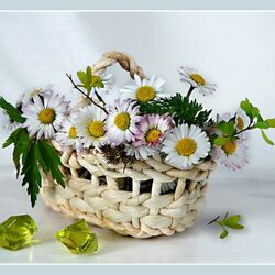 Jigsaw puzzle: Chamomile in a wicker basket