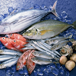 Jigsaw puzzle: Fresh fish