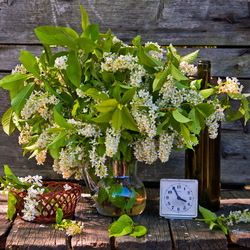Jigsaw puzzle: Still life with bird cherry