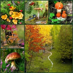 Jigsaw puzzle: Mushroom photo sketches