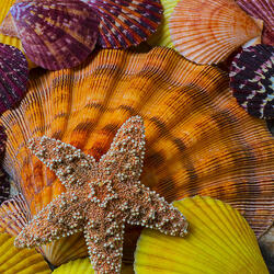 Jigsaw puzzle: Seashells and star