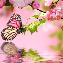 Jigsaw puzzle: Butterfly and sakura