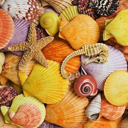 Jigsaw puzzle: Star with shells