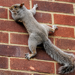 Jigsaw puzzle: Squirrel on the wall