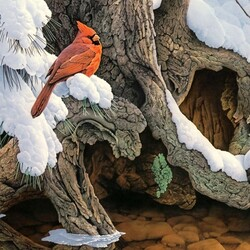 Jigsaw puzzle: Cardinal in winter