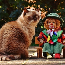 Jigsaw puzzle: Clown doll