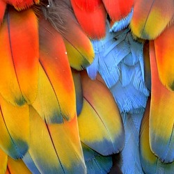 Jigsaw puzzle: Colored feathers