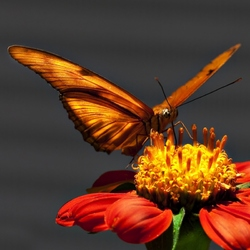 Jigsaw puzzle: Butterfly on a flower