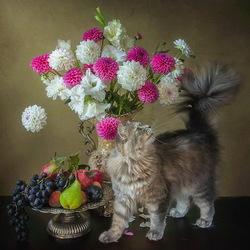 Jigsaw puzzle:  I have a tail like a bouquet