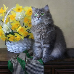 Jigsaw puzzle: Masyanya and a basket of daffodils