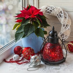 Jigsaw puzzle: Still life with poinsettia
