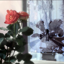 Jigsaw puzzle: Winter and roses