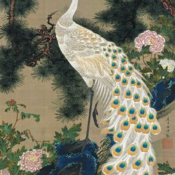 Jigsaw puzzle: White peacock