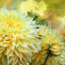 Jigsaw puzzle: Yellow dahlias