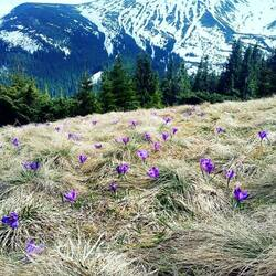 Jigsaw puzzle: And spring has come to the mountains