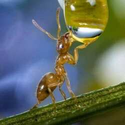 Jigsaw puzzle: Ant and drop